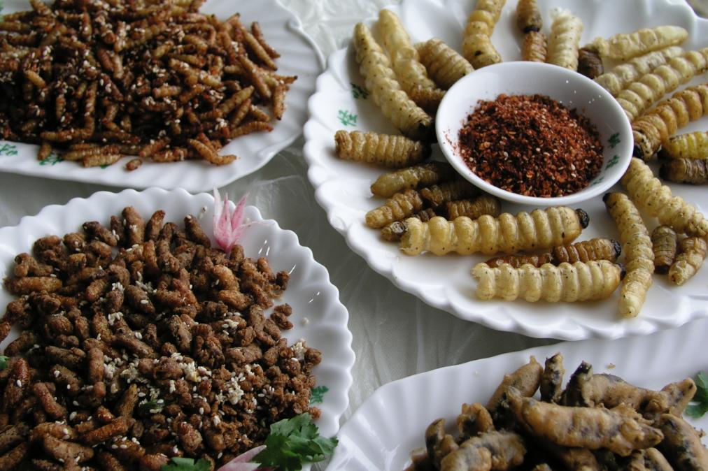 insectes-comestibles